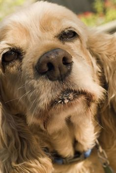 How to Prevent Kidney Stones in Dogs