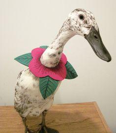 """I'm not a Duck, I'm a Flower!  PartyFowl """"Flower Collar"""""""