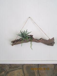 Driftwood Planters, Driftwood Crafts, Hanging Planters, Staghorn Fern Mount, Platycerium, Moss Wall Art, Air Plants Care, Air Plant Display, Flower Farmer