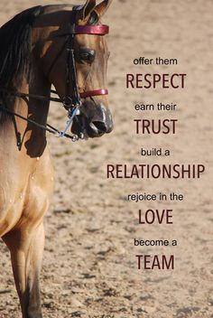 """Offer them respect, earn their trust, build a relationship, rejoice in the love, become a team."" #HorseQuote"