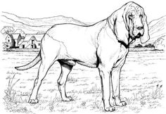 dog color pages printable | Bloodhound dog coloring page | Super Coloring