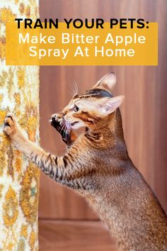 Homemade Bitter Apple Spray Dog Information, Cat Treats, All Dogs, Dogs And Puppies, Diy Stuffed Animals, Cat Toys, Dog Safety, Bitter, Cat Facts
