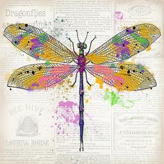 Dragonfly On Newsprint-jp3454 Print By Jean Plout