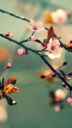 Na flowers sakura Beautiful Flowers Wallpapers, Beautiful Nature Wallpaper, Cute Wallpapers, Beautiful Landscapes, Flowers Nature, Exotic Flowers, Pretty Flowers, Flower Backgrounds, Wallpaper Backgrounds
