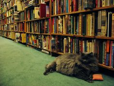 luv bookstore cats. Fenchurch - All Cats Are Grey