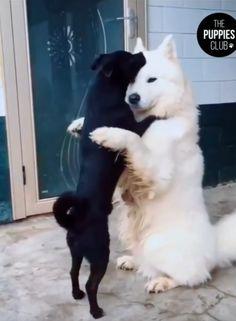 סרטון שהגיע לידינו מציג שני כלבים מתחבקים. Love Is Everything, Husky, Puppies, Club, Dogs, Animals, Instagram, Animales, Animaux