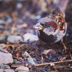 "Nahren Warda on Instagram: ""#sommerprix #naturehippys #ig_masterpiece #rsa_ladies #worldclassshots #friend_spotlight #fs_member #rsa_macro #global_capture7 #tgif_macro…"" Tgif, Spotlight, Bird, Instagram, Photography, Animals, Photograph, Animales, Animaux"