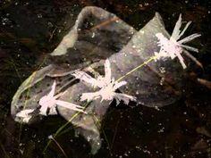 Autumn Leaves (EWI USB + Mr.Sax T) Autumn Leaves, Usb, Fall Leaves, Autumn Leaf Color