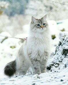5 Winter Cat Grooming Tips To Help Kitty's Coat Through The Cold, Dry Months - unknown animals Pretty Cats, Beautiful Cats, Animals Beautiful, Cute Cats And Kittens, Kittens Cutest, Funny Animals, Cute Animals, Funny Cats, Animals Images