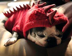 Dino Puppy #dog #puppies