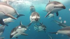 Dolphins Filmed with Torpedo Housing : Shizzle Kicks
