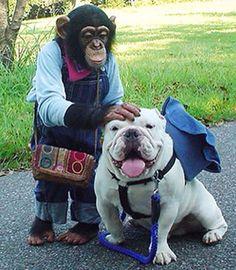 Best friends forever! ~WorldofBulldog
