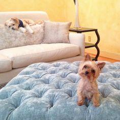 Os 30 Menores Cães Na Terra | PressRoomVIP - Part 12