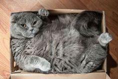 17 Katzen, die auf Ihre Meinung pfeifen #gutscheinlike #likeblog #katzen #tiere #lustig #bilder #lustigbilder #blog #interessant