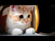 Funny Cat Videos [funny cats compilation] Part1 -  #animals #animal #pet #cat #cats #cute #pets #animales #tagsforlikes #catlover #funnycats  Learn how to speak cat! Click HERE for the cat bible! funny cats funny cat videos try not to laugh or grin funny cat vines funny cats and dogs funny cat videos 2016 funny cats compilation funny cat videos... - #Cats