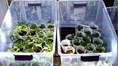 Repurpose clear storage totes as mini-greenhouses. Eventually most of your plants will grow and build up their cold tolerance so they can be planted in the soil and you can flip the clear tote over as an improvised cold frame while the plant's root systems are getting established.