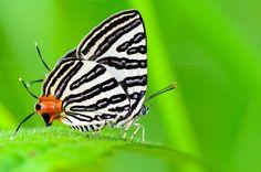 Close up butterfly by Yongkiet on @Horseshoe Bend, Arizona