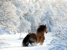 Trotting in a winter wonder land.