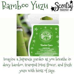 Bamboo Yuzu  #scentsy  #fragrance #bamboo
