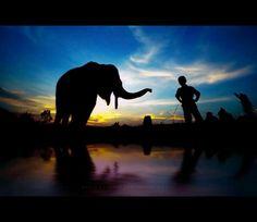 """Elephant and Kiki"" Location: Elephant Conservation, Minas, Riau, Indonesia. Model: Baby Elephant & Kiki (5 years old). By: Perry Gunawan on Deviantart.com"
