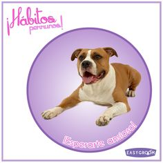 #Hábitosperrunos ¿Qué hace tu perrito apenas te ve?