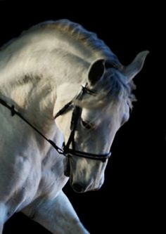 Horse / Lipazon (by  Paparazzipen)