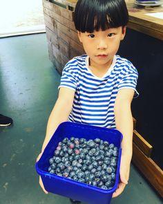Kids always enjoy PYO blueberries! 😉  www.lavenderbackyard.co.nz  #pyo #pickyourown #blueberry #blueberries #family #fun #holiday