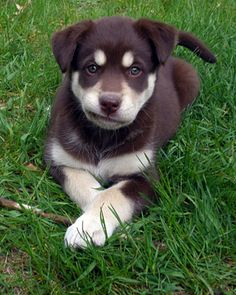 """I am considering your request to """"come here.""""  However, due to the comfiness of this grass and the fact that I love to make you feel as """"dumb as a dog,"""" as you say, your request may very possibly be denied."""