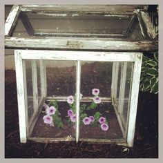 Old Window Greenhouse.filled with planted petunias. Old Windows, Windows And Doors, Planter Ideas, Planters, Old Window Greenhouse, Terracotta Pots, Old Wood, Petunias, Outdoor Ideas