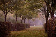 Интересная защита пространства у дерева. подойти сложно, ничига не сорвешь, наверно для парков хорошое решение ...