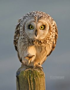 you put your right foot in .. and shake it all about -Owl