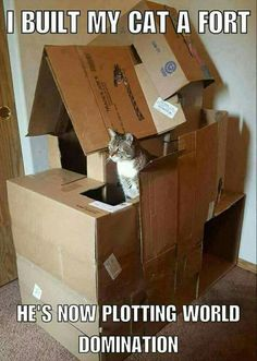 That's a pretty epic box fort. #diycatboxfort #catmemes