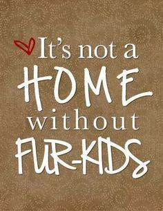 ♥ it's not a home w/o FUR-KIDS ♥