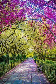 Central Park | New York City
