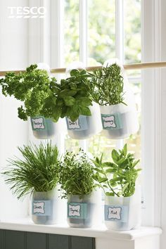 Make your own DIY herb garden using old milk bottles. Hang on a recess or place on windowsill to save space