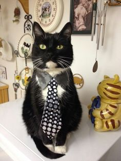 I'm ready for my new job!