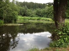 Natur pur - in der Nähe vom Klopeinersee. River, Outdoor, Outdoors, Outdoor Games, The Great Outdoors, Rivers