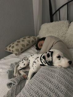 Fluffy Animals, Animals And Pets, Baby Animals, Cute Animals, Cute Puppies, Cute Dogs, Dogs And Puppies, Doggies, Pets 3
