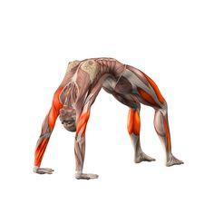 Upward bow pose - Urdhva Dhanurasana - Yoga Poses | YOGA.com