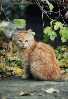 Adorable Orange tabby