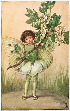 Illustration for the May Fairy from Flower Fairies of the Spring. A girl fairy stands facing front, holding a branch of may.  										   																										Author / Illustrator  								Cicely Mary Barker