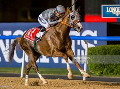 California Chrome, the 2014 U.S Horse of the Year, ridden by Victor Espinoza, wins the Dubai World Cup by 5 lengths at Meydan Racecourse on March 26, 2016 in Dubai, United Arab Emirates.