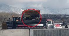Video viral del Departamento de Transporte de E.E.U.U arrojando vacas vivas a un camión de basura - EligeVeg.com