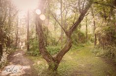Nature  | Carolyn Delles Photography