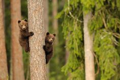 20 Adorable Pictures of Momma Bears with Their Cubs