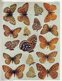 32 Best Reference Images Butterfly Images Papillons