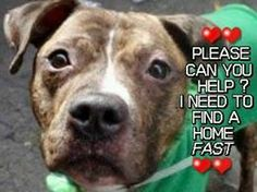 TO BE DESTROYED 3/10/14 - Volunteers have all good things to say about Sherman. He's affectionate, sweet, house trained, love chasing the ball and welcomed dogs of all sizes to the pen. Manhattan Center -P. My name is SHERMAN. My Animal ID # is A0992746. I am a male brown pit bull mix about 4 YRS old. https://www.facebook.com/photo.php?fbid=765802323432649&set=a.611290788883804.1073741851.152876678058553&type=3&theater