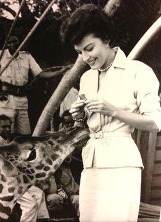 Ava Gardner feeding a giraffe on location filming Mogambo (1953).