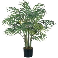 Nearly Natural Silk Areca Palm Tree with Pot ($81) ❤ liked on Polyvore featuring home, home decor, floral decor, plants, fillers, flowers, decor, butterfly palm, flower stems and nearly natural