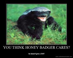 This honey badger doesn't give a…